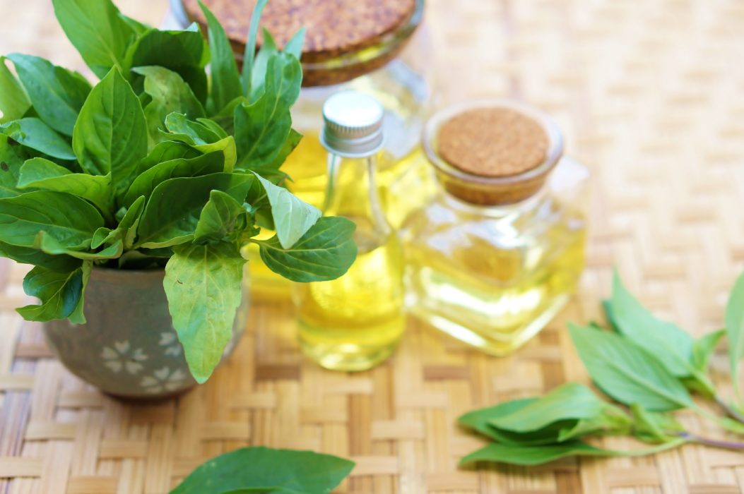 Let Sweet Basil Oil Boost Your Health Today - AlrightNow