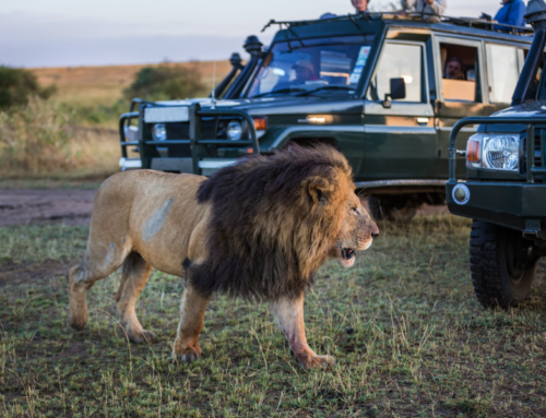 Letting Luxury Guide the Way in Africa