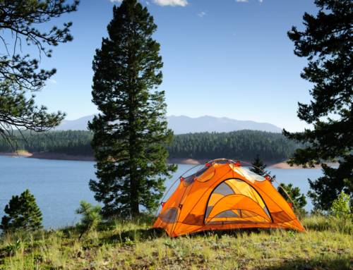 Top 3 Forest Eco-Camp Adventures
